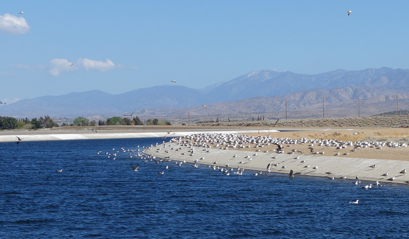 The San Gabriel Mts visible on the horizon lie between the Mojave Desert where I live and the Los Angeles basin.