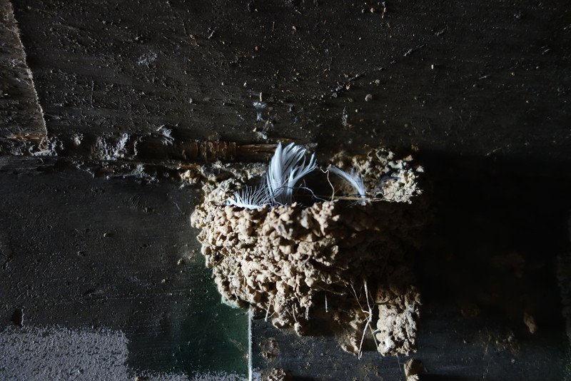 Barn Swallow nest.  There was a lot of them in the tunnel.
