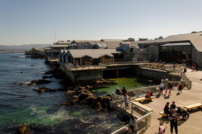 Monterey Aquarium - One of the best aquariums in the country
