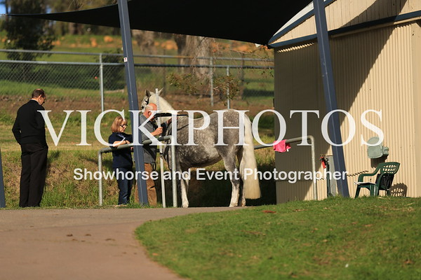 Selection and Judging of Baroque Horses - 26.5.2012