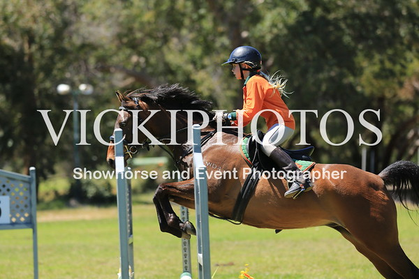 SHOW JUMPING - HEIGHT 65CM