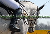 2013 Equestrian Events : 7 galleries with 2269 photos