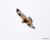FSC_1637 Rough-legged Hawk Dec 27 2013