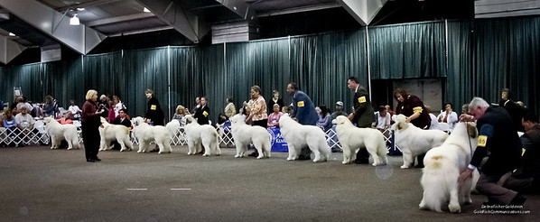 Great Pyrs and Peers-634
