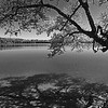 Wood Lake 06 B&W