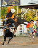 2013 Misc. Rodeo Proofs : 15 galleries with 5172 photos