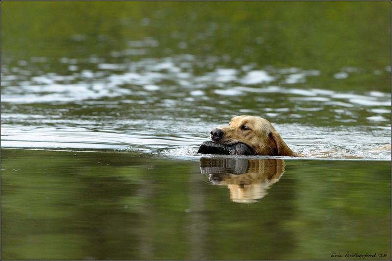 Retriever Hunt Test