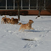 LCC K-9 Comfort Dogs playing in the snow in the courtyard at The Lutheran Home of Southbury (CT)