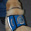 9-week-old Comfort Dog in Training - Isaiah