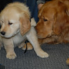 Comfort Dogs Isaiah and Luther at Newtown High School