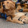 Comfort Dogs Luther and Isaiah at Newtown High School