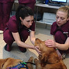 LCC K-9 Comfort Dogs spending time with the hospital personnel on during their visit.