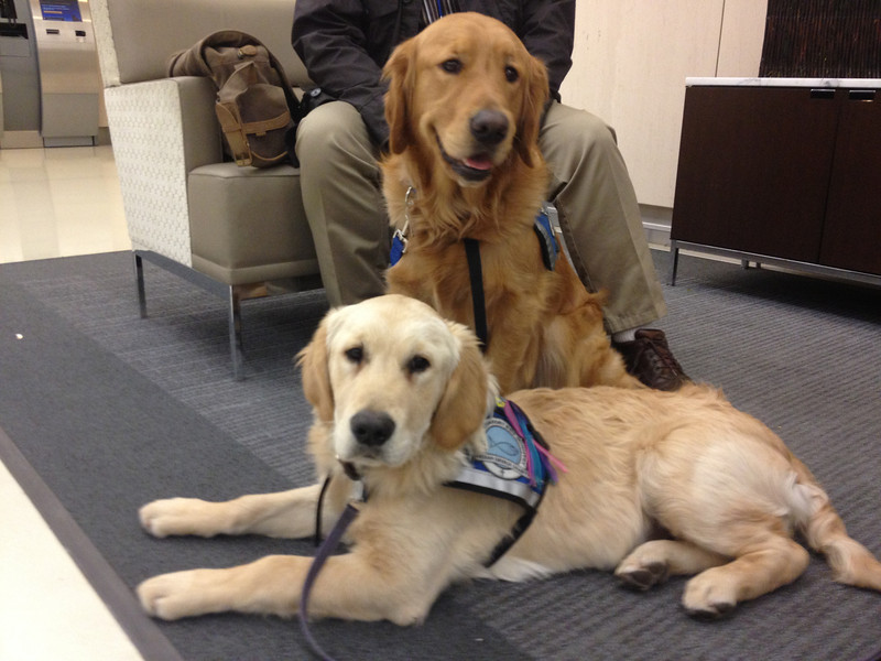 Luther and Isaiah waiting patiently to board (United Airlines)