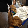 K-9 Comfort Dogs Ruthie and Luther along with LCC staff Rich and Dona Martin visit with a survivor of the bombings in Boston just before she went into surgery for her leg.