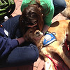 """LCC K-9 Comfort Dog Maggie is having a wonderful time sharing the love and comfort of Jesus Christ with the people of Boston! Follow her at  <a href=""""http://www.facebook.com/maggiecomfortdog"""">http://www.facebook.com/maggiecomfortdog</a>"""
