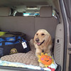 Moses Comfort Dog settling in for his ride from Cairo, Nebraska to Centennial, Colorado to visit the students from Arapahoe High School.