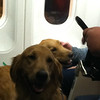 K-9 Comfort Dogs Barnabas and Hannah riding on the United Airlines flight from Chicago to Denver. This was Barnabas' first ever flight! He did great.