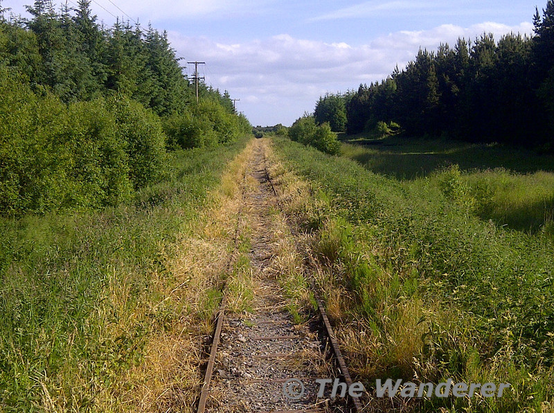 An evening walk in Derryounce Bog, Co. Offaly along a very overgrown Bord na Mona railway line. Wed 19.06.13