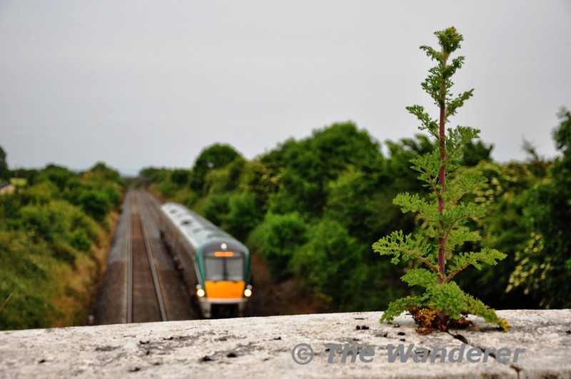 A weed grows out of OBC114 at Killenard as 22029 passes with the 1945 Heuston - Portlaoise. Wed 26.06.13