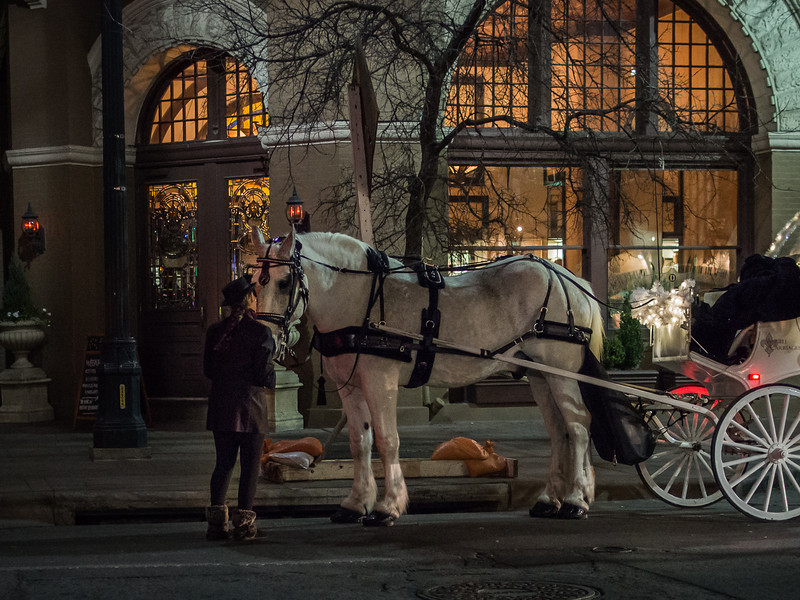carriage horse and driver share a private moment