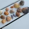 Sea Shells from the beach in Destin FL
