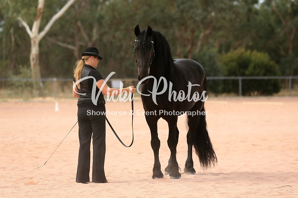 Friesian Led Classes
