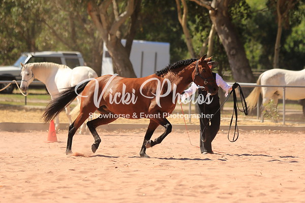 Lunging Test