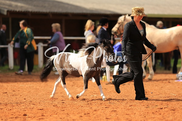 Supreme of Supreme 12hh & Under & Runner Up