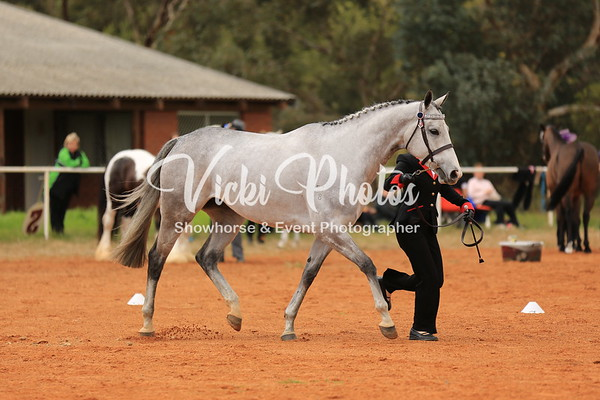 SOS Over 12hh - Runner Up and Grand Champion Dilutes
