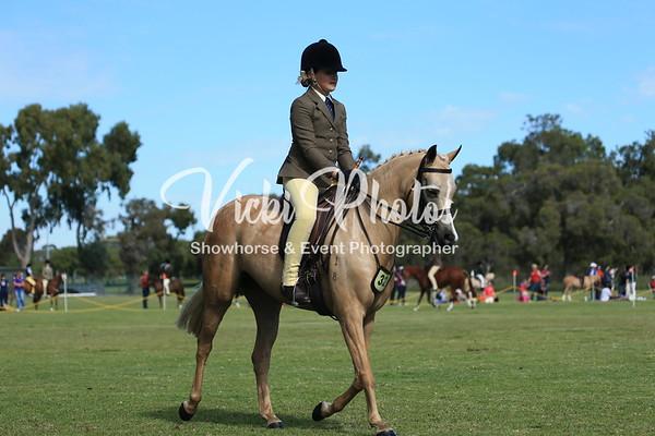 Show Hunter Large Pony.