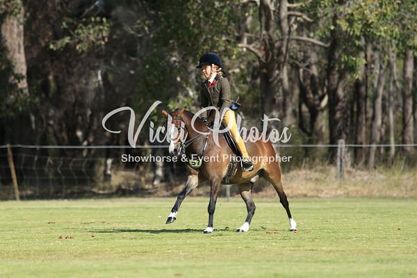 Show Hunter Small Pony