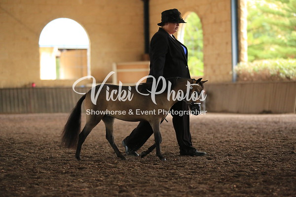 Miniature Horse Classic Classes