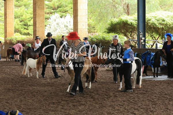 Miniature Horse Halter Classes