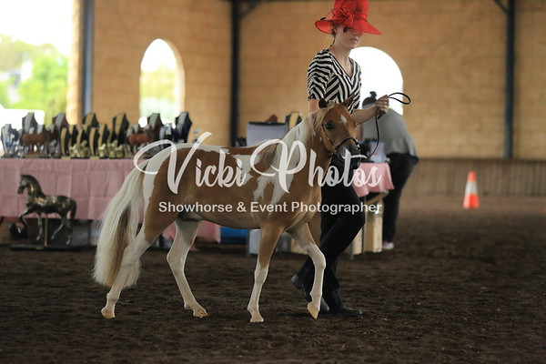 Small Horse Classic Classes