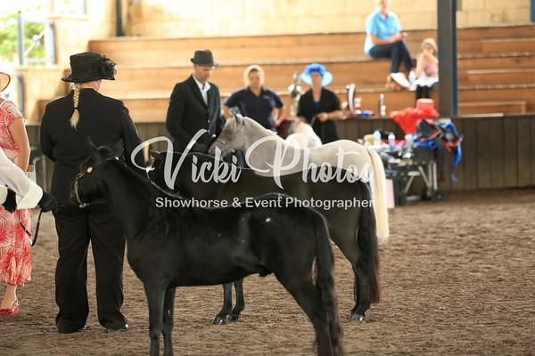 Small Horse Halter Classes