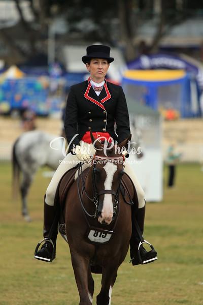 Champion Arabian Derivative - Ridden Class