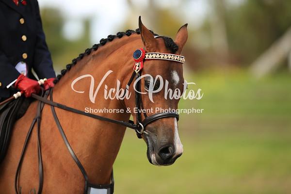 Novice Pony Ring