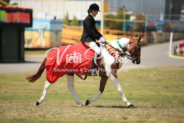 Grand Champion Ridden Pinto