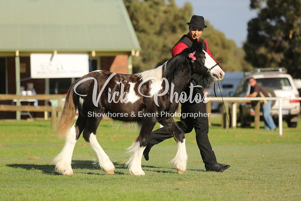 Heavy Horse Breeds