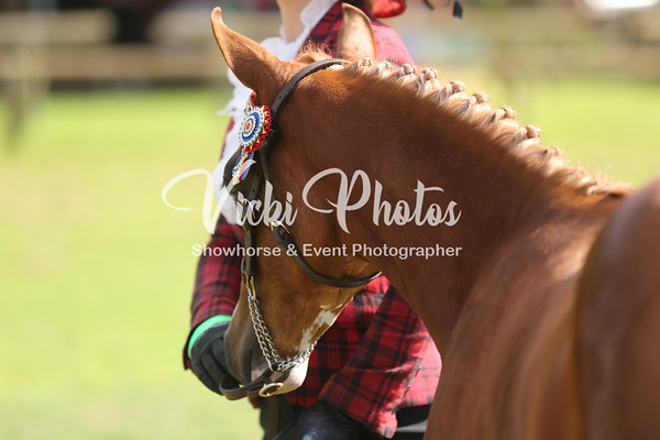 Ring 2 - Grand Champion Foal