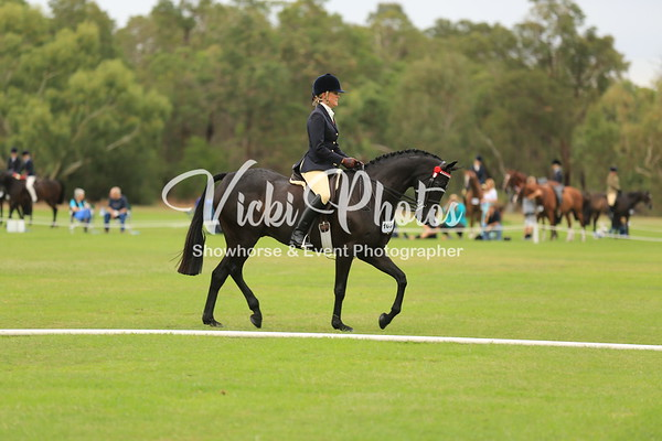 Official Show Pony and Show Hack Rings