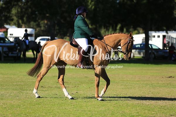 Ridden Newcomer Show Horse
