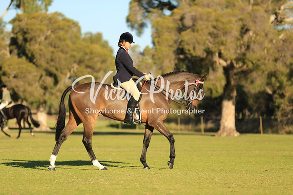 Champion Ridden Show Horse and Open Hunter Classes.