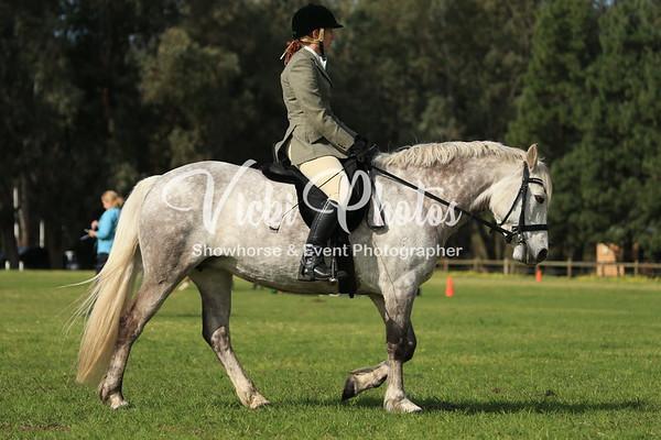 Native Pony Ridden Classes