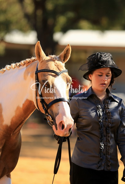 Wooroloo Breed Show  -  31.3.2013
