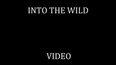 82   INTO THE WILD