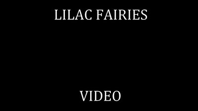 55   LILAC FAIRIES