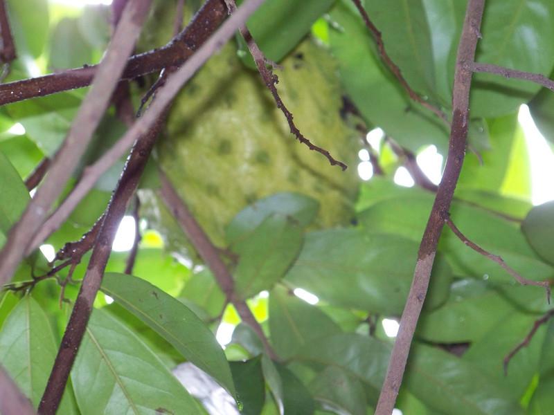 1013 - Tour of Spice Plantation - Zanzibar - Tanzania.JPG