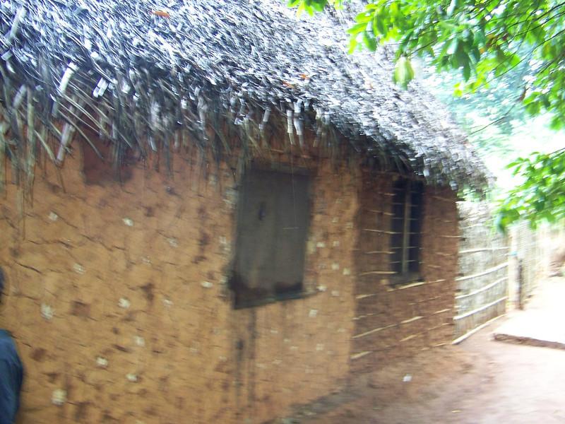 1011 - Tour of Spice Plantation - Banna Tree - Zanzibar - Tanzania.JPG