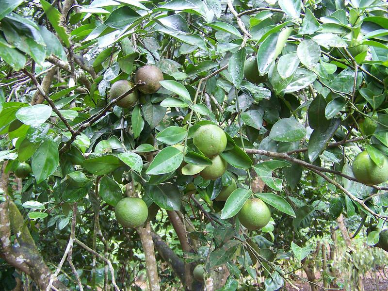 1016 - Tour of Spice Plantation - Zanzibar - Tanzania.JPG